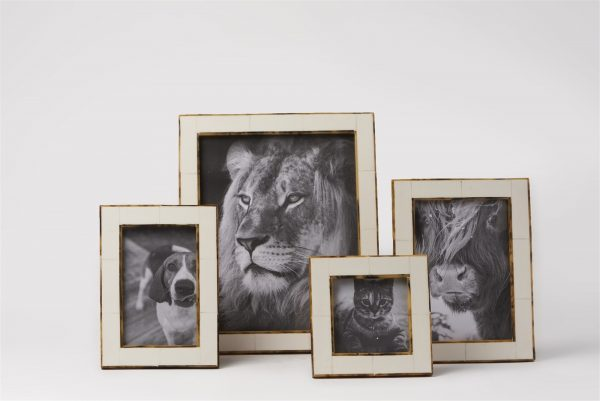 Horn Picture Frame with Tortoise Border Photos