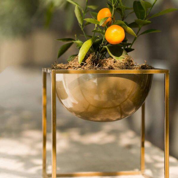 Medium Bowl Planter Lifestyl