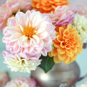 Darling Dahlia Paint by Numbers Kit