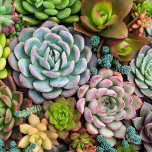 Sensitive Succulent Paint by Numbers Kit